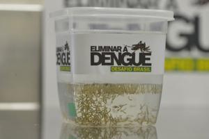 Projeto Eliminar a Dengue: Desafio Brasil