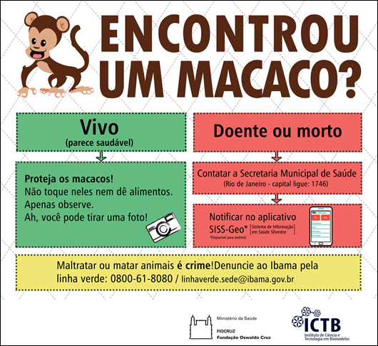 Morte de macacos pela população prejudica controle da febre amarela